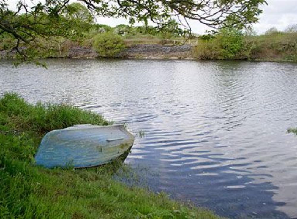 Surrounding area at Teifi in Llangoedmor, Nr Cardigan, Dyfed., Great Britain