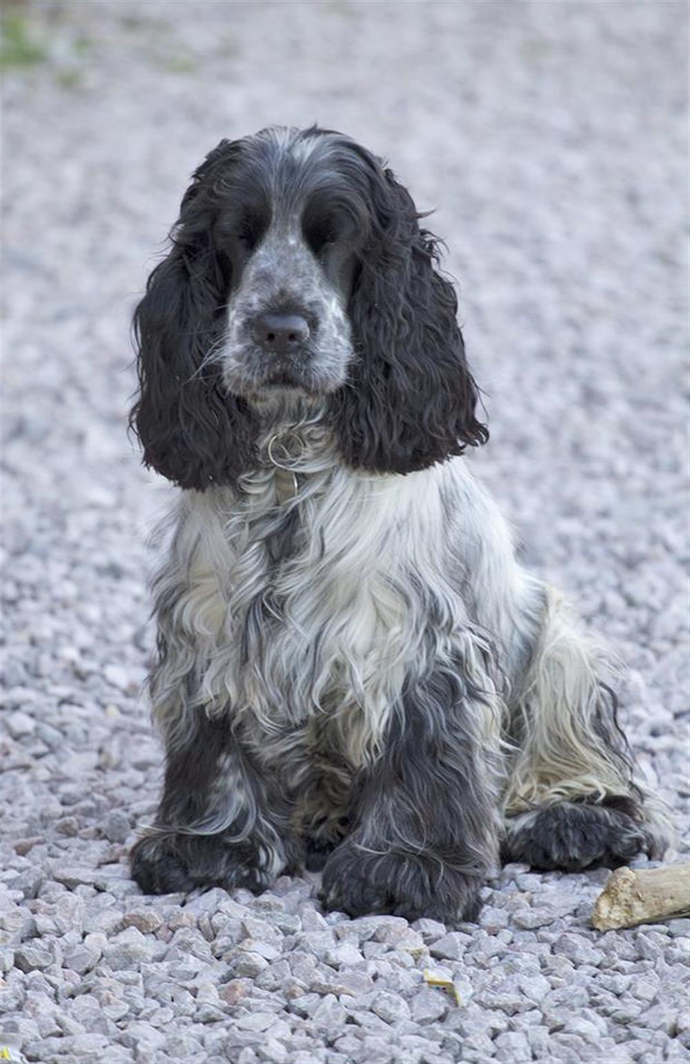 Toby, the owners dog will, if asked nicely, allow other well behaved dogs to visit at The Old  Bakehouse, Dittisham