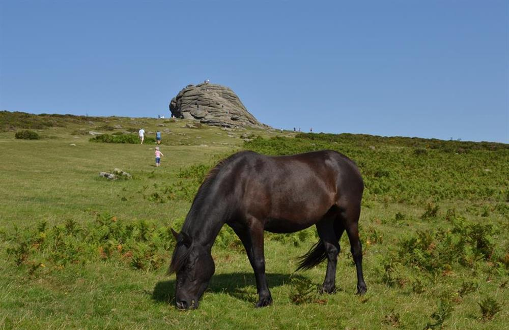 Endless walking or cycling opportunities are found on Dartmoor at The Old Dairy, East Allington