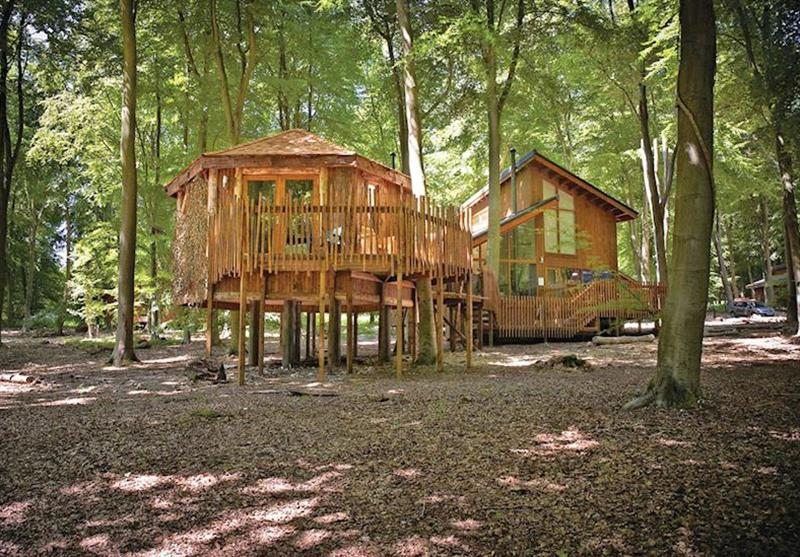 Typical Golden Oak Treehouse 5 at Thorpe Lodges in Norfolk, East of England