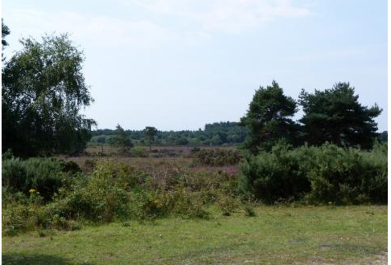 Nature Reserve at Wareham Forest Lodge Retreat in Holton Heath, Dorset